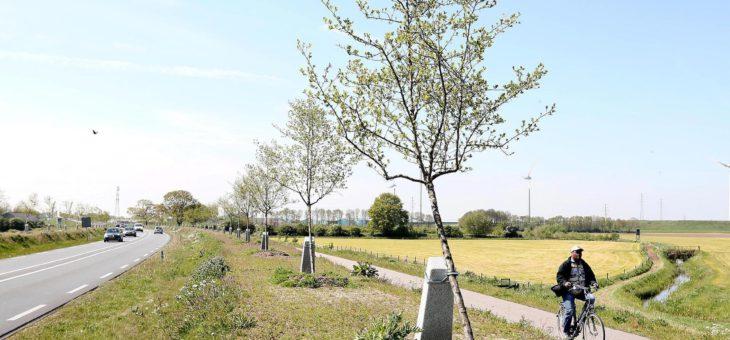 Het Witte Lint genomineerd voor boomproject van het jaar